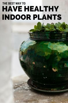 It can be hard to keep indoor plants healthy. One day they're fine, one day they're not. Here are tips to help make it easier on you to keep plants up.