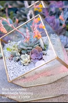 DIY Succulent Arrangements How to DIY succulents beautiful? Get rare succulents online. Over 500 + exotic rare succulents for sale. Use Discount code: We bring joy to your home gardening experience! Terrariums Diy, Terrarium Centerpiece, How To Make Terrariums, Terrarium Plants, Succulent Terrarium Diy, Making A Terrarium, Glass Terrarium Ideas, Terrarium Table, Hanging Glass Terrarium