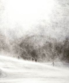 pic of the day - foto del giorno  Nella tormenta.  photo by: @giacomopiove  via Nikon on Instagram - #photographer #photography #photo #instapic #instagram #photofreak #photolover #nikon #canon #leica #hasselblad #polaroid #shutterbug #camera #dslr #visualarts #inspiration #artistic #creative #creativity