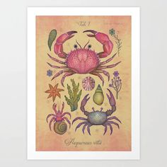 Aequoreus vita I / Marine life I Art Print by Vlad Stankovic - X-Small Sea Plants, Water Plants, Crab Art, Weird Creatures, Creative Industries, Life Drawing, Marine Life, Easy Drawings, Vintage Prints