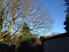 Marple Tree Surgeons North Cheshire Forestry Based in Marple Bridge Stockport Greater Manchester WE ARE COMMITED TO PROVIDING THE VERY BEST IN CUSTOMER SERVICE. North Cheshire Forestry--19, Brabyns Brow, Marple Bridge. Stockport SK6 5DT Give us a call now -open for business 24/7