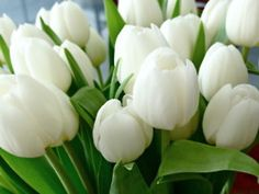 love tulips...especially white tulips