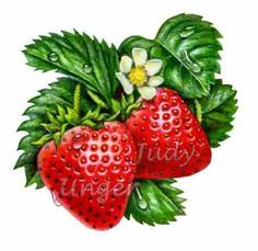 Strawberries & Blossom by Judy Unger