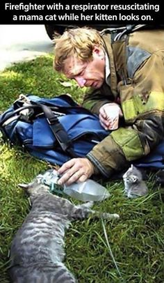 """""""Firefighter with a respirator resuscitating a mama cat while her kitten looks on."""" Faith in humanity restored! Cute Kittens, Cats And Kittens, Baby Animals, Funny Animals, Cute Animals, Wild Animals, Crazy Cat Lady, Crazy Cats, Mama Cat"""