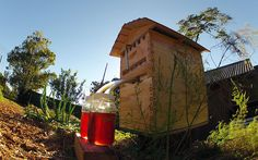 Father and son from Australia spent a decade inventing a plastic hive with a tap for collecting honey – then sold over £1 million worth in 24 hours