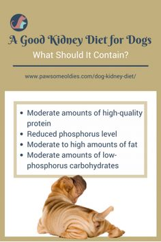 Kidney Diet Low-protein diet is not necessary for dog kidney failure. So what makes a good kidney diet for dogs? Find out here.Low-protein diet is not necessary for dog kidney failure. So what makes a good kidney diet for dogs? Find out here. Kidney Diet For Dogs, Dog Kidney Disease Diet, Dog Kidney Failure Diet, Kidney Recipes, Dog Food Recipes, Renal Dog Food, Kidney Friendly Diet, Low Protein Dog Food, Make Dog Food
