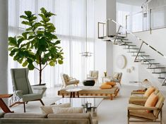 modern white loft living room with fiddle fig tree