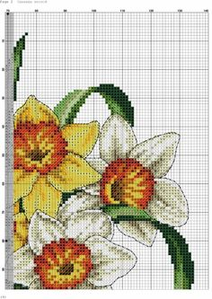 Daffodils 2/5
