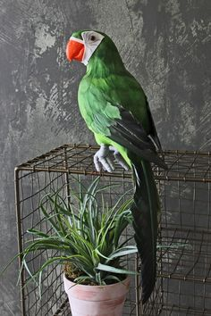 Faux Green Parrot - View All - Home Accessories