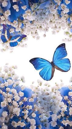 Blue Butterfly Wallpaper, Flower Phone Wallpaper, Butterfly Painting, Butterfly Art, Love Wallpaper, Cellphone Wallpaper, Galaxy Wallpaper, Wallpaper Backgrounds, Iphone Wallpaper