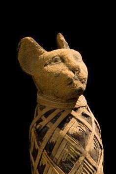 Nova técnica RX revela segredos dos gatos mumificados pelos antigos Egípcios.Turns out there's more than one way to scan a cat.