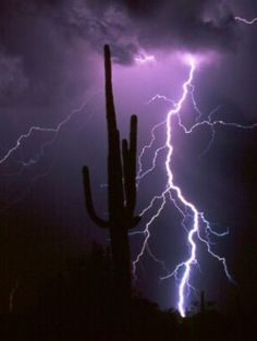 Lightning forks to the ground behind a saguaro cactus during a monsoonal thunderstorm in the sonoran desert near Florence Arizona. (via Pin by Jailyne Rivas on THUNDERSTORMS Tornados, Thunderstorms, Natural Phenomena, Natural Disasters, Gaia, Fuerza Natural, Monsoon Rain, Lightning Strikes, Lightning Storms
