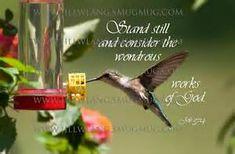 1000 hummingbird quotes on pinterest halloween