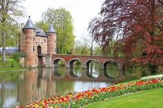 Tulips, narcissus, crocus, snowdrops… All the flowering bulbs in the world will await you at Floralia Brussels!
