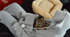 Cat Hoodie With Kangaroo Pouch Lets You Take Your Pet Wherever You Go | Bored Panda @maryem333
