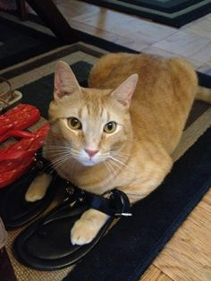 We think Cliff looks purrrfect in these sandals. Don't you?