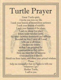 Turtle Prayer - Lady Adrienne's Cauldron