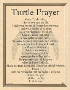 Turtle Prayer - Lady Adrienne's Cauldron