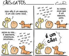 Cães e gatos – A visita 2