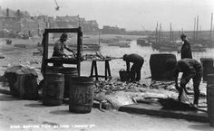 sorting fish, St Ives 1925