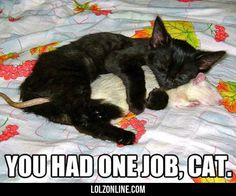You Had One Job, Cat                                                                                                                                                                                 More