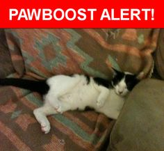 Please spread the word! Figaro was last seen in Daly City, CA 94015.    Nearest Address: Near Pinehaven Dr & Glenrose Ave