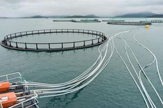 Companies in Europe have developed new kinds of feed for salmon farms that could help the environment—if they can scale up quickly.