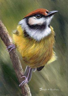 Original Bird Painting - Art - Rufous Crowned Tody Flycatcher - SFA - Wildlife - 5 x 7 inches acrylic painting - Realistic Bird Australian Birds, Australian Artists, Pretty Birds, Beautiful Birds, Seascape Paintings, Bird Paintings, Painting Art, Colorful Birds, Bird Art