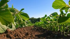 3 Challenges Growers Face in Current Agriculture Landscape - In the Furrow Blog