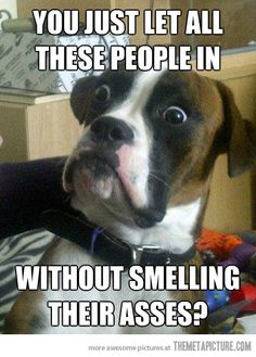 I hate animal memes but this one kills me...