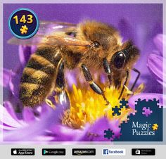 I've just solved this puzzle in the Magic Jigsaw Puzzles app for iPad. Image Storage, Puzzle Board, Bee, Magic, Jigsaw Puzzles, Ipad, Animals, Pictures, Photos