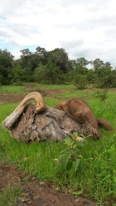 It may take a village to raise a child, but at the David Sheldrick Wildlife Trust (DSWT) in Nairobi, Kenya, it takes an ostrich to raise an elephant Animals And Pets, Baby Animals, Funny Animals, Cute Animals, Unusual Animal Friends, Unusual Animals, Beautiful Creatures, Animals Beautiful, Baby Elefant
