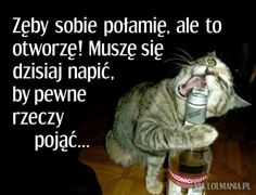 Zdjęcie Weekend Humor, Haha, Motivation, Funny, Quotes, Anime, Pug, Alcohol, Quotations