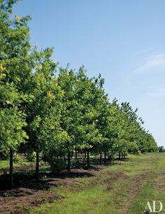 Former President George W. Bush's tree farm | archdigest.com