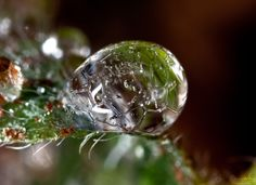 A frozen dew drop.
