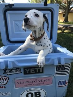 just happy to be here Animals And Pets, Baby Animals, Funny Animals, Cute Animals, Cute Puppies, Cute Dogs, Dogs And Puppies, Doggies, Dalmatian Dogs
