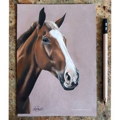 I can now share this commissioned piece 🤗 pastel This beautiful chestnut was gifted yesterday in America 🌏 Chloe Brown, Horse Artwork, Oil Portrait, Body Poses, Contemporary Artwork, Pet Portraits, A5, Original Artwork, Pastel Artwork