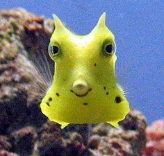 かわいい魚、熱帯魚 画像011