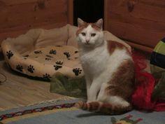 Mickey Cat | Pawshake Massenhausen