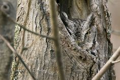 camouflaged-owls-3