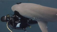 Dailytimes | Shark swims up to divers everyday asking to be pet