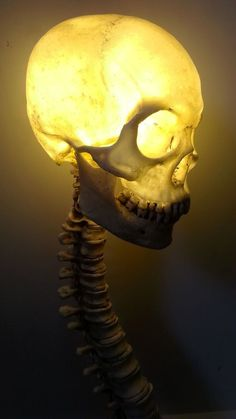 Life Size Human Skull w Spine LED Lamp Halloween Prop