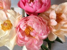 Coral Charm Peonies from Elizabeth Salter Event Styling and Floristry