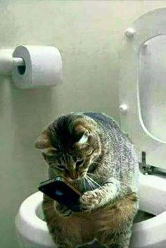 10 Best Funny Animal Photos for Tuesday   Best Funny Photos