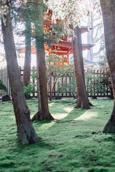 Japanese Tea Garden | sebastian | VSCO Journal