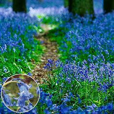 Growers of Dutch bulbs & perennials since K. van Bourgondien and wholesale flowers go hand in hand. Choose from our wide range of quality products. Garden Bulbs, Planting Bulbs, Shade Garden, Autumn Flowering Plants, Fall Plants, English Bluebells, Gardening Zones, Gardening Blogs, Kitchen Gardening