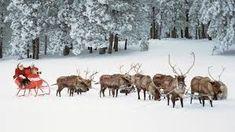 Image result for santas reindeer