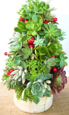 {Succulent Tree Topiary} Want! My succulents always seem to get dry at the bottoms this time of year. Christmas Tree Topiary, Topiary Trees, Christmas Decorations, Christmas Holidays, Holiday Tree, Wedding Decorations, Xmas, Garden Art, Garden Plants
