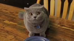 This kitty in this video is hilarious! Cute Cats, Funny Cats, Funny Animals, Cute Animals, Sneaky Cat, Matou, All About Cats, Funny Cat Videos, Cat Health