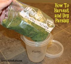 How to Harvest and Dry Parsley Homemade Insecticide, Mexican Food Recipes, Healthy Recipes, Herb Seeds, Dehydrated Food, Unique Gardens, Freeze Drying, Gardening Tips, Urban Gardening